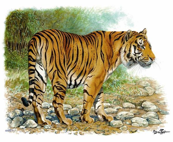 (上图:Robert Dallet 作品《中国华南虎》) Herms 还赞助了 Robert Dallet 的作品展Fierce and Fragile: Big Cats in the Art of Robert Dallet,为促进保护大型猫科动物的组织 Panthera 筹款。这场展览的举办地为美国康涅狄格州格林威治的 Bruce博物馆,展览结束时间为 3月 13日。 Panthera 创立于 2006年,旨在提高人们对濒危大型猫科动物及其栖居地的保护意识。本月,Panthera 创始人兼