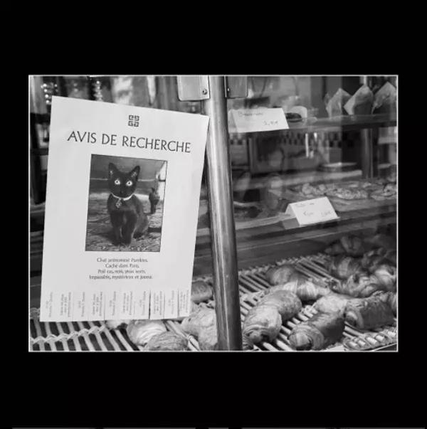 """纪梵希在四个城市贴海报,""""你见过这只猫吗?"""