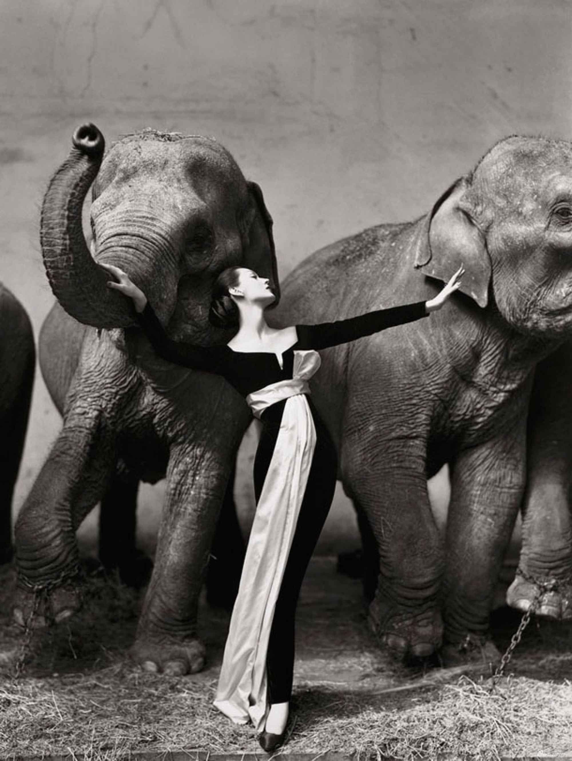Dovima and the Elephants