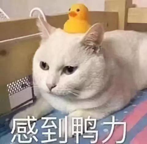 2019年秋冬女�b流行色 超美超高�!(�D1)