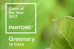 Pantone公布2017年度代表色「草木绿」