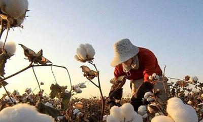 皮棉点价销售方式被接受 纺企欲锁定新花开展新攻势