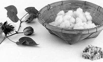 2017中国国际棉花会议:国内棉花市场变好了吗