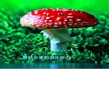 秀�鲋��|2021SS杭州���H�r尚周收官日