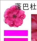 蓬巴杜粉色的秘密