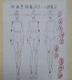 服装设计人体模特