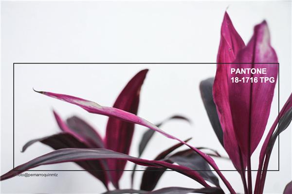 王者娱乐app-室内纺织品设计偏爱2019秋冬流行色——布朗红