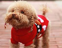 狗主人出于爱给宠物买衣服 宠物服装市场未来发展向好